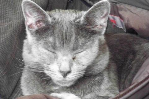 welches trockenfutter f r katzen ist wohl das beste tierfutter katzenfutter. Black Bedroom Furniture Sets. Home Design Ideas