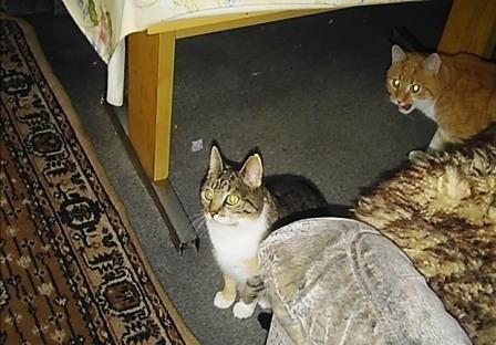 welches trockenfutter f r katzen ist wohl das beste katzenfutter tierfutter. Black Bedroom Furniture Sets. Home Design Ideas