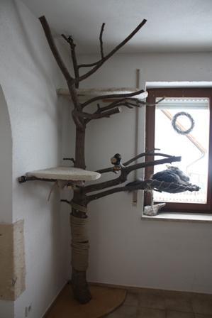 hi leute will mein kratzbaum verbessern tiere katze. Black Bedroom Furniture Sets. Home Design Ideas