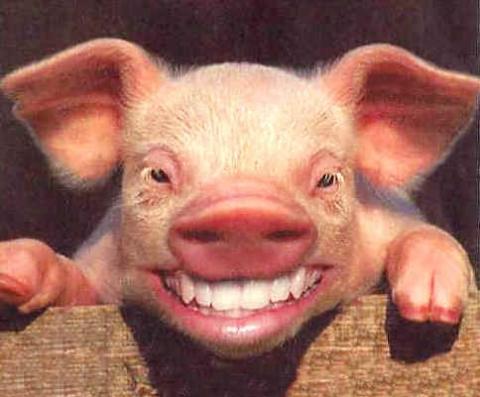 lächeln zähne zeigen