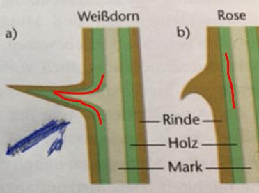 Dornen und stacheln analoge organe