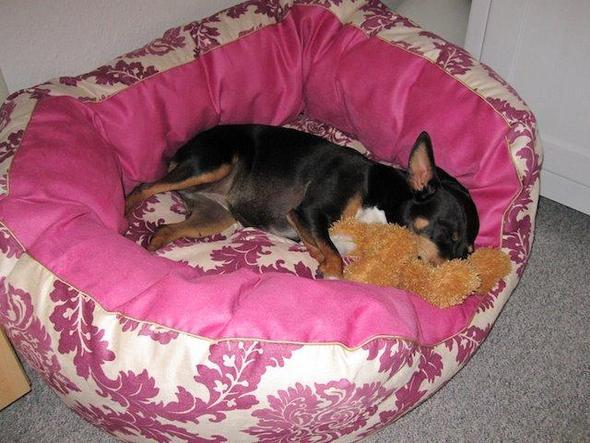 wo bekommt man ein hundebett hunde bett. Black Bedroom Furniture Sets. Home Design Ideas
