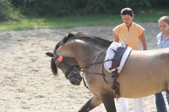 Rollkur - (Pferde, Reiten, Dressur)
