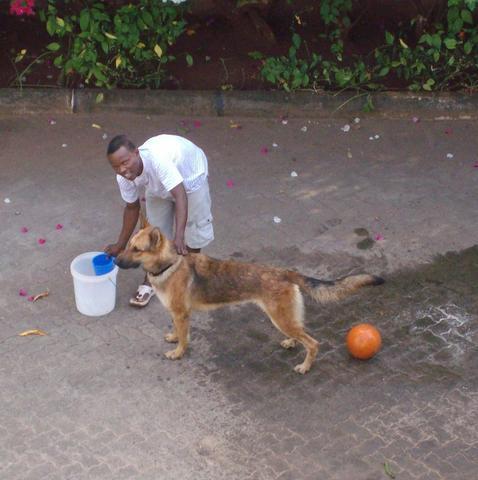 Lasko 2 Jahre alt. - (Hund, Rasse, Rhodesian Ridgeback)