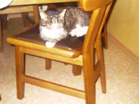 Bilduntertitel eingeben... - (Katze, Ratschlag, Mittel)