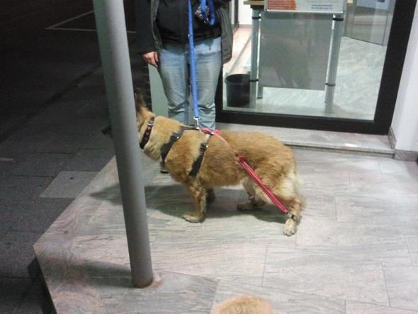 Mein Hund in einer Trainingspause..... - (essen, Hund, Apfel)