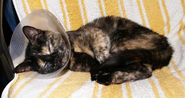 Feliz mit Trichter - (Katze, Katzen, Tierarzt)