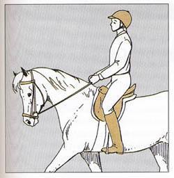 Richtiger Sitz  - (Pferde, reiten, Haltung)