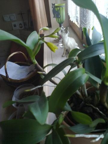 wie heisst diese Blume? - (Garten, Pflanzen, Blumen)