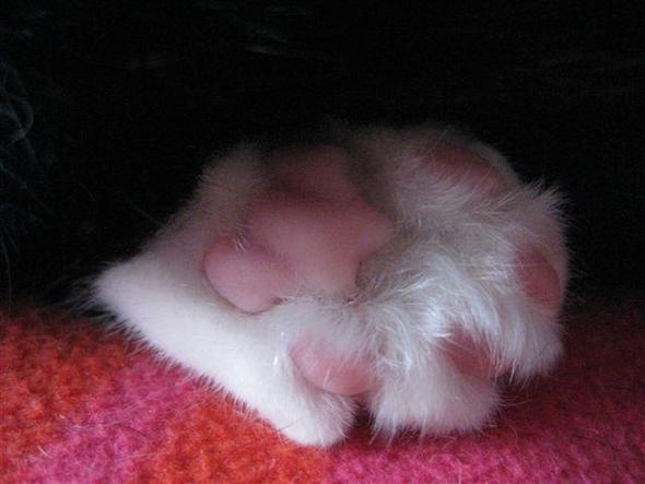 gefährliche waffe ;o) - (Haustiere, Katzen, Tierarzt)