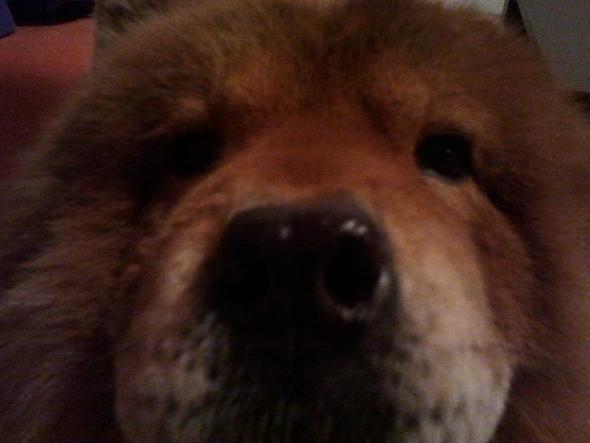 hehe  - (Hund, versöhnung)