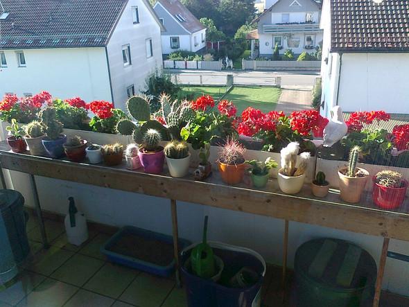 - (Gesundheit und Medizin, Pflanzen, Natur)