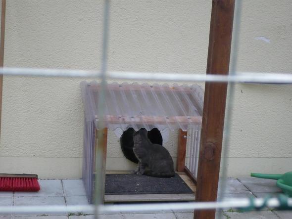 garten katzen sicher machen katzen paradies sicherheit. Black Bedroom Furniture Sets. Home Design Ideas