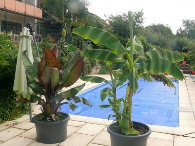 - (Tiere, Garten, Pflanzen)