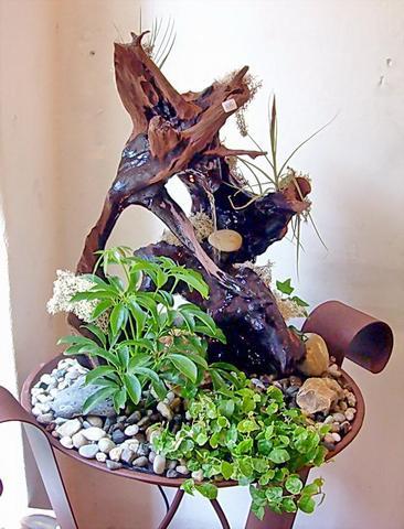 kaktus in zimmerbrunnen pflanzen. Black Bedroom Furniture Sets. Home Design Ideas
