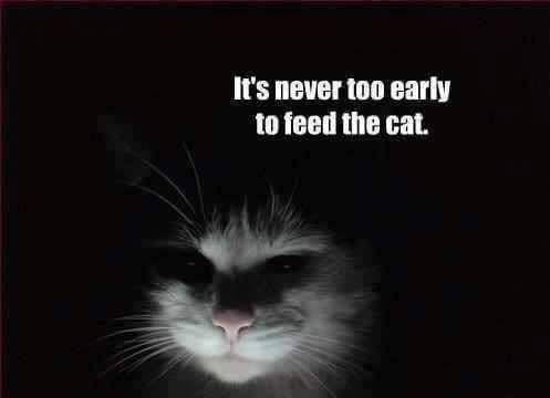 Katzen Daran Gewohnen Nachts Nicht Im Schlafzimmer Zu Schlafen Gesundheit Und Medizin