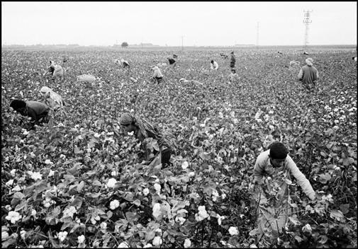 Baumwollernte in China - (Bau)