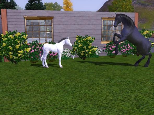 Sims 3 ideen spielen - Sims 3 spielideen ...