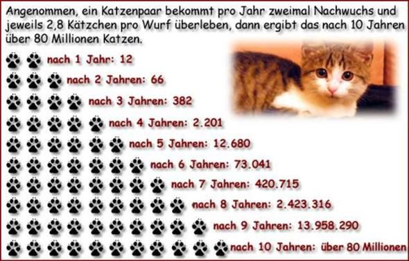 - (Gesundheit und Medizin, Katzen, Kater)
