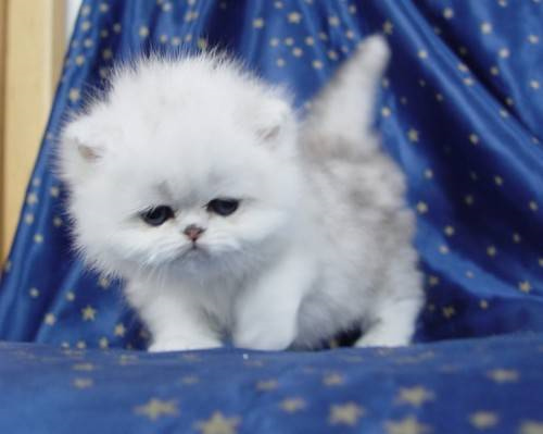- (Tiere, Katze, Katzen)