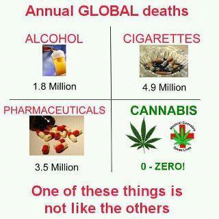 Jährliche Tote - (Freizeit, Cannabis, Legalität)
