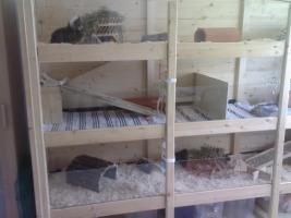 wer hat tipps f r einen selbstgebauten meerschweinchenk fig meerschweinchen k fig. Black Bedroom Furniture Sets. Home Design Ideas