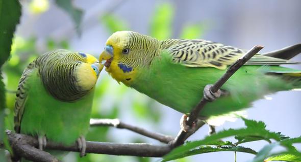 wie küsst man richtig mit zunge