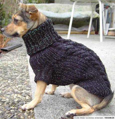Hundepullover Mit Verschluss Hund Mode Stricken