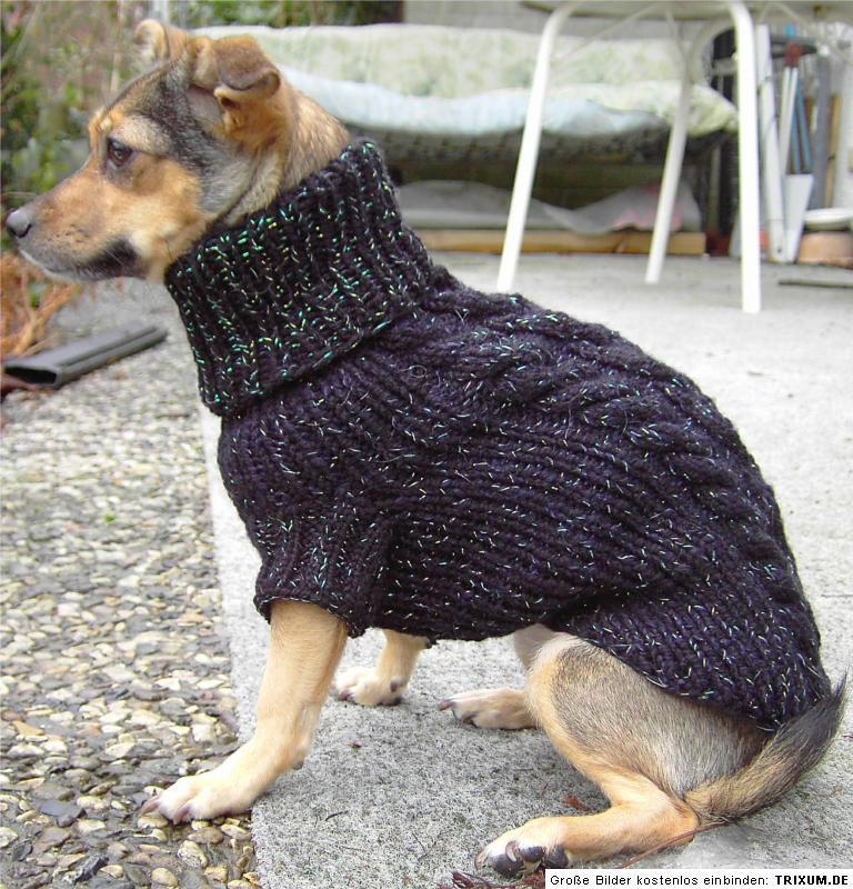 Hundepullover Stricken. einen hundepullover stricken. hundepullover ...