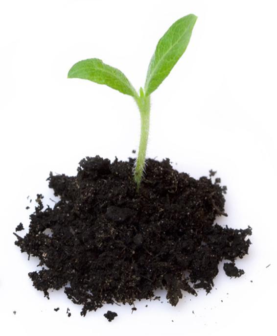 wie hei t eine pflanze wenn sie gerade vom samen geschl pft ist garten pflanzen. Black Bedroom Furniture Sets. Home Design Ideas