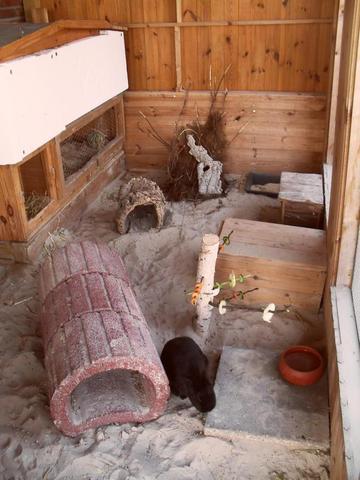 Viel Beschäftigung - (Haustiere, Kaninchen, Langeweile)