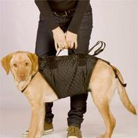 tragehilfe für den hund - (Tiere, Hund, krank)