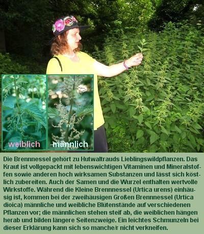 Brennnessel weiblich-männlich - (Biologie, Pflanzen, Natur)