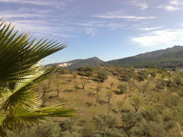 Landschaft bei Ronda - (Urlaub, Pferde, Reiten)
