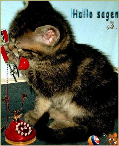 Hallo sagen - (Geburtstag, Katze, Torte)