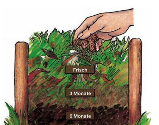 Kompost - (Chemie, Biologie, Wissen)