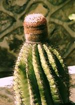 Turk Cactus  - (Spass, Ferien, Geographie)