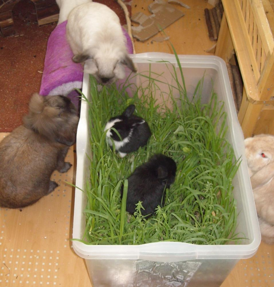 Kaninchen spielzeug stall leckelies online kaufen