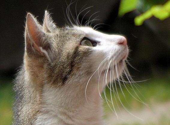 tierheimkatze, bild des jahres 2009 - (Katzen, Baby)