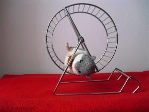 Schereneffekt an einem STOFFTIER demonstriert - (Freizeit, Hamster, Hamsterlaufrad)