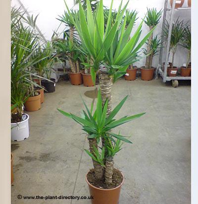 Geschenk Pflegeleichte Pflanzen