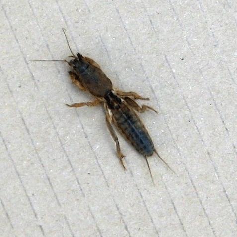 was ist das ist das gef hrlich tiere insekten. Black Bedroom Furniture Sets. Home Design Ideas