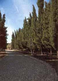 Auffahrt Castelo Paraiso mit Thujas - (Garten, Pflanzen, Sommer)