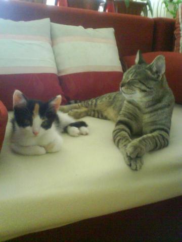 Meine zwei Süssen...:-)) - (Katze, Erziehung)
