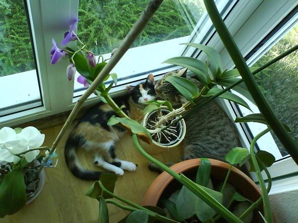 Am Fenster... - (Katze, Erziehung)