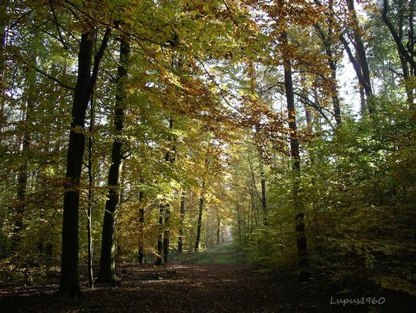 Herbstwald - (Kunst, Berlin, zeichnen)