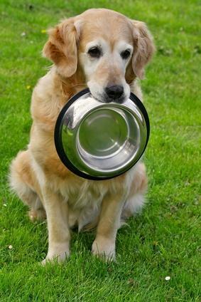 Der Hund braucht schon wieder Nachschub ;-) - (Freunde, Hund, Menschen)