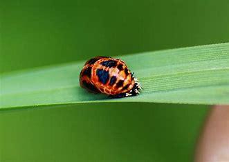 - (Pflanzen, Garten, Käfer)