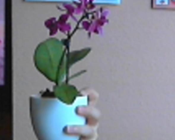 wie pflege ich meine mini orchidee richtig blumen. Black Bedroom Furniture Sets. Home Design Ideas