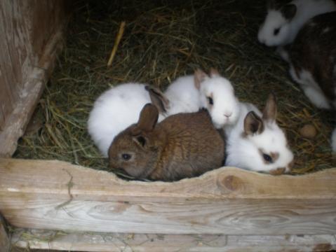 wie viele grad minus halten hasen drau en im stall aus kaninchen stallhaltung. Black Bedroom Furniture Sets. Home Design Ideas